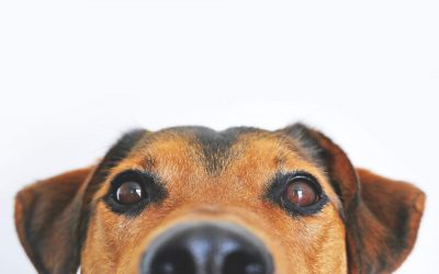 CBD For Your Pet's Anxiety